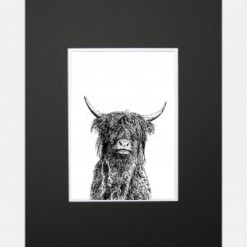 Crafty Coo Limited Edition Mounted Print