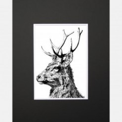 Imperial Stag Limited Edition Mounted Print
