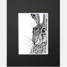 Shy Hare Limited Edition Mounted Print