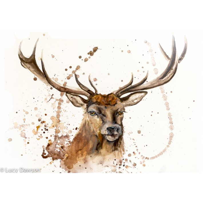 Framed Angus Stag